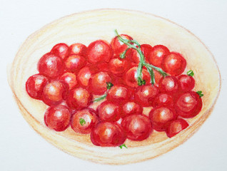 Hand drawn fresh cherry tomatoes. Realistic illustration. Colored pencils drawing of raw vegetables