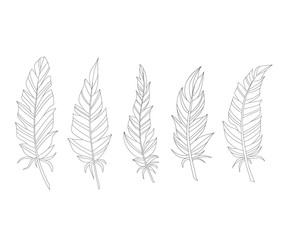 Hand drawn feathers on a white background.