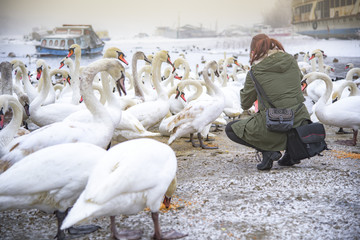 Girl feeding swans near a cold frozen river