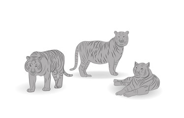 Tigers. vector illustration