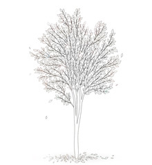 Tree with leaves on white background vector