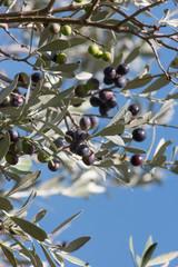 Olive su un ramo