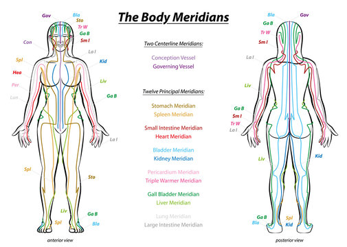 MERIDIAN SYSTEM CHART - Female body with principal and centerline acupuncture meridians - anterior and posterior view - Traditional Chinese Medicine.