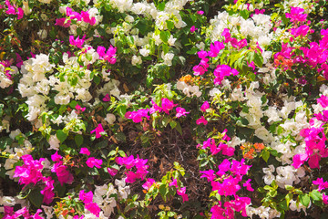 pink and white flowers with green leaves as background