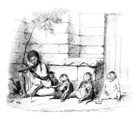 A Merchant of monkeys in Cairo, vintage engraving.