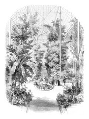 View taken in the greenhouses of the Jardin des Plantes in Paris