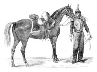 Horse Warmblood of cavalry, vintage engraving.