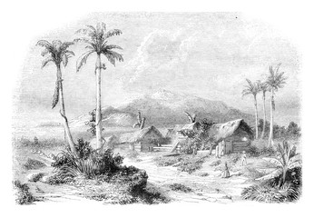 Landscape of Guadeloupe, from nature, vintage engraving.
