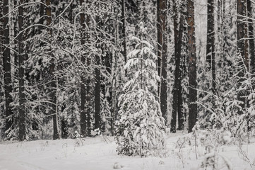 tree trunks and branches in the winter forest