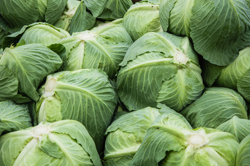 The cabbage closeup