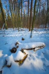 Winter forest at sunny day