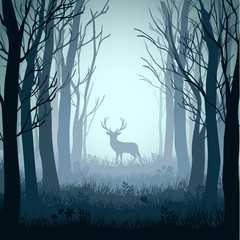 Deer in autumn misty forest background