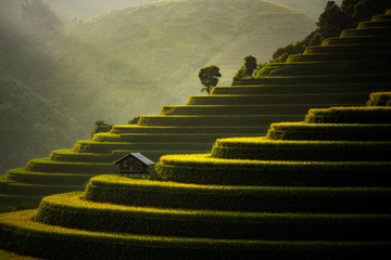 Wall Murals Rice fields The Rice Fields On Terraced Of Mu Cang Chai, In Northern Vietnam.