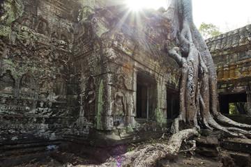 Tomb Raider inspiration Ta Prohm temple in Cambodia
