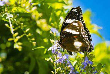 Beauty Butterfly on flower
