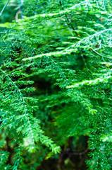 Tiny fern leaves