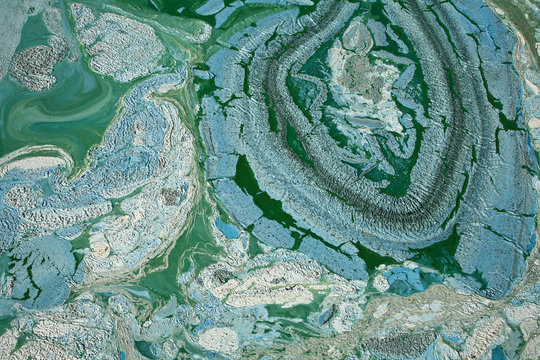 Blue-green algae on a lake in denmark