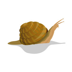 Vector real color snail isolated on white background
