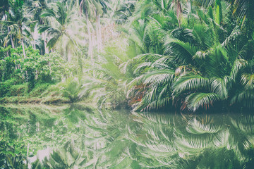 Green palms on the shore of the pond. Beautiful tropical landsca