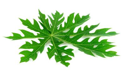 Papaya leaf isolated on white background