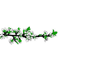 illustration of a blooming branch isolated on white