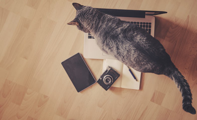 Working concept - cat near mobile devices on the floor.