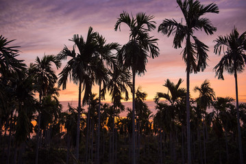 Many plant Palm trees in the garden in the morning .