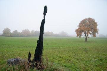 Abgebrannter Baum
