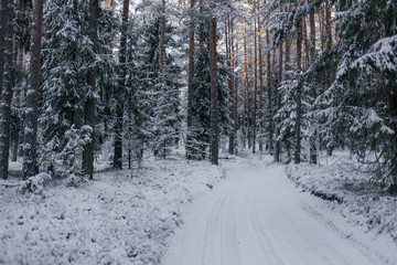 Winter, snow covered road in forest at sunset