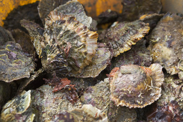 Oysters on the seashore.