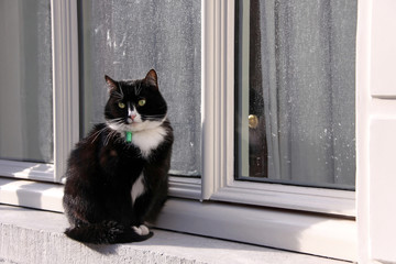 black and white cat sitting by the window