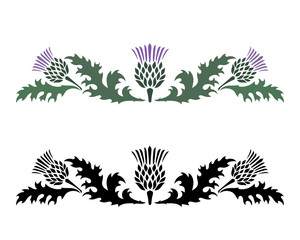 Thistle. Onopordum acanthium. Scottish Thistle