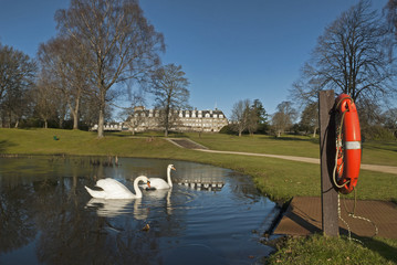 Swans on lake at Gleneagles Perthshirre Scotland