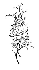 Hand drawn peony rose flower with branches for decorate. Black ink on white background. Can be used for decorate postcards, tattoo, engraving, etching, decorate t-shorts, tunics, bags.