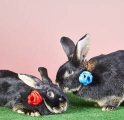 Two black rabbits with colored roses from ribbons cute lie near each other