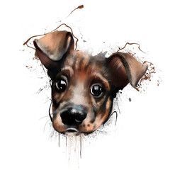 Beautiful portrait of a funny puppy with huge surprised eyes, closeup on white background with splashes of paint. How to print hoodies