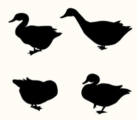 Duck Silhouette Set - vector