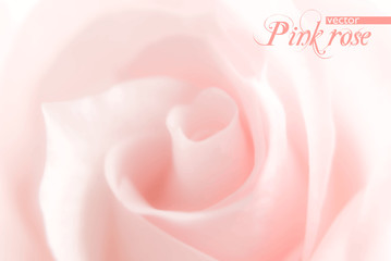 Background with blurred pink rose. Vector