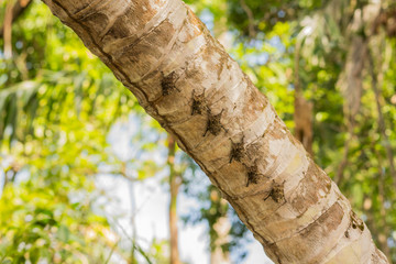 Five Proboscis bats resting on a tree trunk along the old Belize