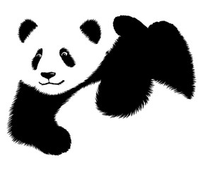 black and white linear paint draw panda illustration