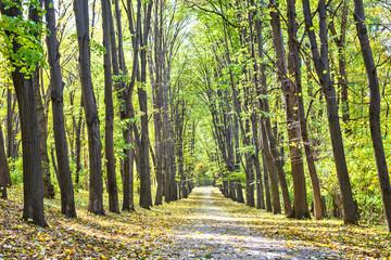 Pathway through the autumn park. Fall season background