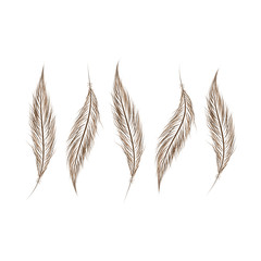set of feathers are hand-drawn on a white background