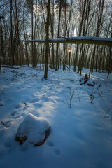 Winter woods in Poland