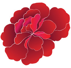 Peony Flower Red Illustration Editable Custom