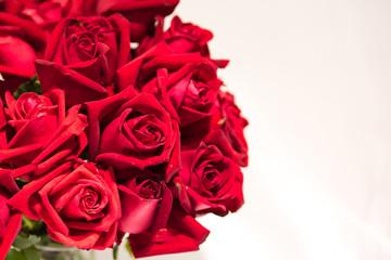 valentine roses