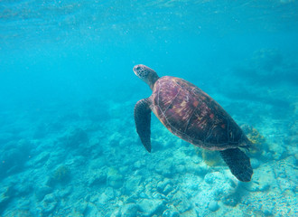Snorkeling photo with sea turtle and text place