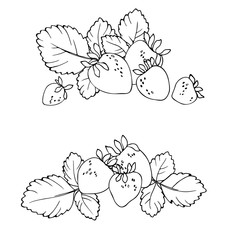 vector contour illustration of berries leaves and flowers strawberry