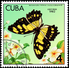 CUBA - CIRCA 1982: Postage stamp printed by Cuba shows butterfly Metamorpha stelenes insularis, series Butterflies