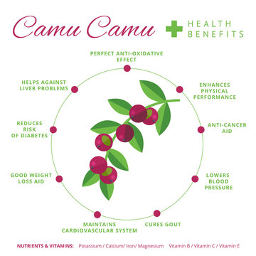 Camu camu berry health benefits and nutrition infographics. Supe
