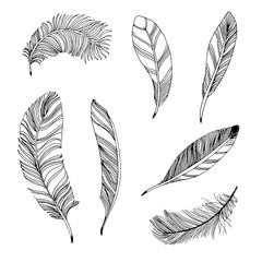 Vector illustration of a hand drawn feathers. Set on a white background, isolate.